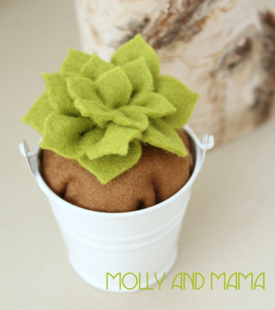 Potted Cactus from Molly and Mama